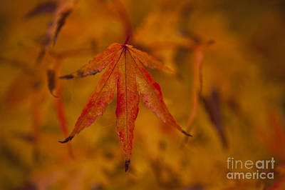 Photograph - Autumn Colors by Jim Corwin