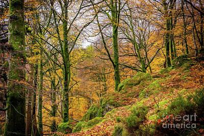 Photograph - Autumn Colours by Adrian Evans