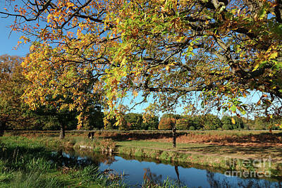 Photograph - Autumn Colours In Bushy Park London by Julia Gavin