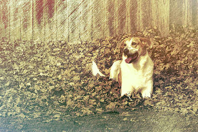 Photograph - Autumn Dog by JAMART Photography