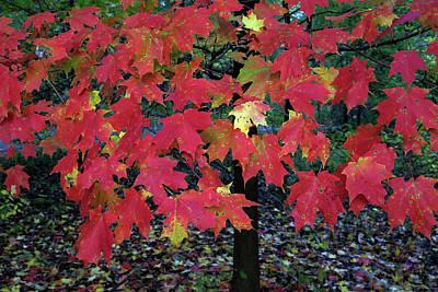 Photograph - Autumn by Dorin Adrian Berbier