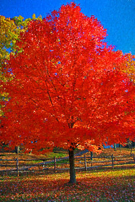 Photograph - Autumn Fire 2 by Allen Beatty