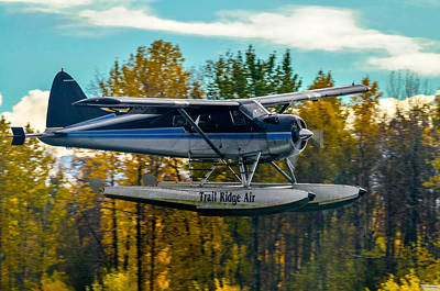 Photograph - Autumn Flight 2 by Brian Stevens