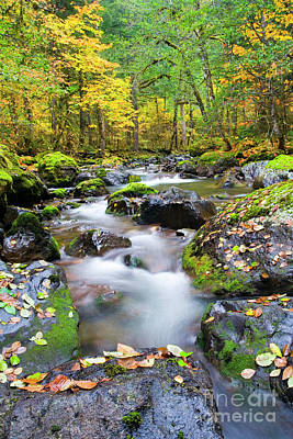 Skate Creek Photograph - Autumn Flow by Mike Dawson
