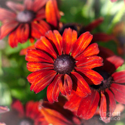 Photograph - Autumn Flowers by Jeremy Hayden