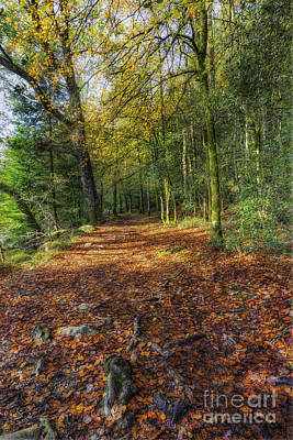 Photograph - Autumn Forest Walks by Ian Mitchell