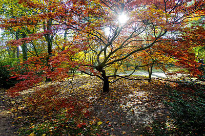 Photograph - Autumn Glory by Christopher Rees
