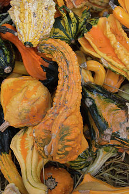 Photograph - Autumn Gourds by Pamela Williams