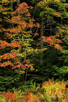 Photograph - Autumn In The Highlands by Thomas R Fletcher