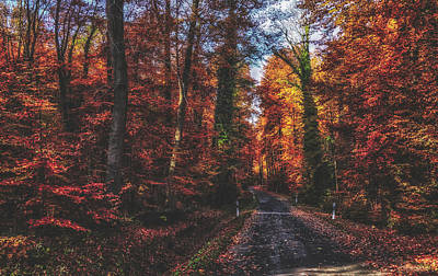 Photograph - Autumn Journey by Pixabay