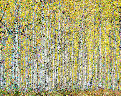Art Print featuring the photograph Autumn Landscape by Vladimir Kholostykh