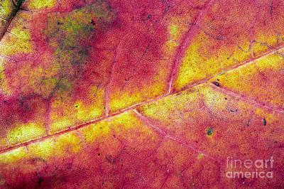 Falltime Photograph - Autumn Leaf by Michal Boubin
