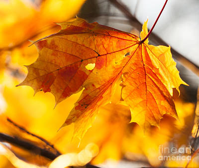 Polaroid Camera - Autumn Leaf by Steven Natanson