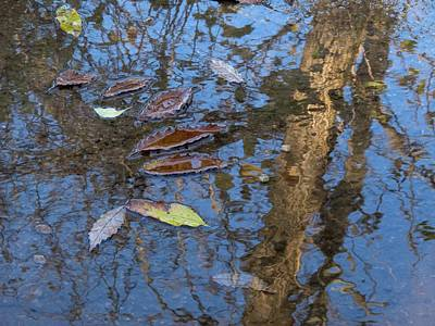 Wall Art - Photograph - Autumn Leave Reflection by Robert Papps