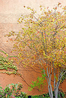 Photograph - Autumn Leaves, A Vine And Adobe by Robert Meyers-Lussier
