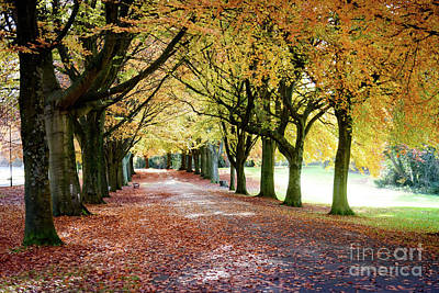 Photograph - Autumn Leaves by Colin Rayner