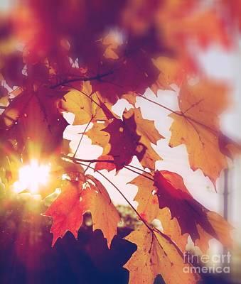 Photograph - Autumn Leaves by France Laliberte