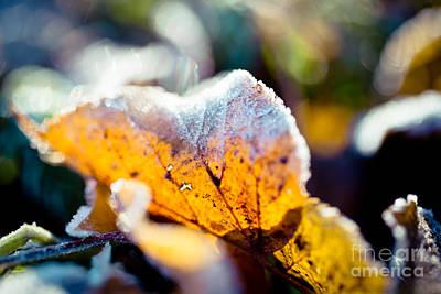 Studio Graphika Literature - Autumn leaves frozen Artmif.lv by Raimond Klavins