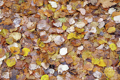 Photograph - Autumn Leaves by George Atsametakis