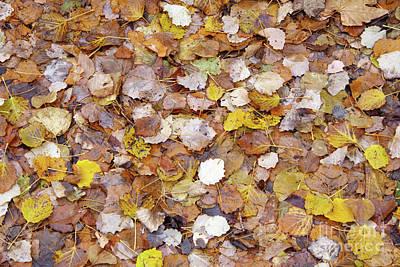 Photograph - Autumn Leaves by George Atsametakis
