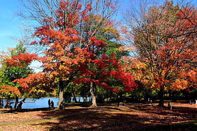 Photograph - Autumn Leaves In Prospect Park by Diane Lent