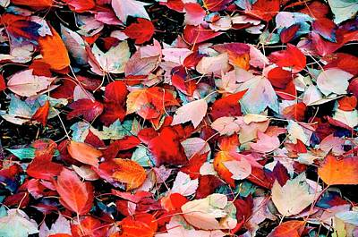 Photograph - Autumn Leaves by Jerry Sodorff