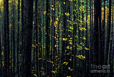 Photograph - Autumn Leaves by Jim Corwin