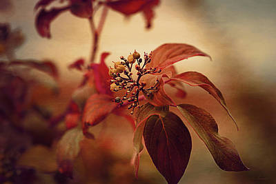 Photograph - Autumn Leaves by Maria Angelica Maira