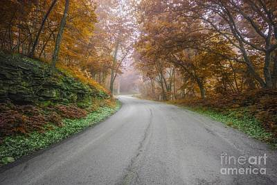 Photograph - Autumn  by Lisa Plymell