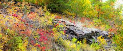 Photograph - Autumn Palette by Mary Amerman