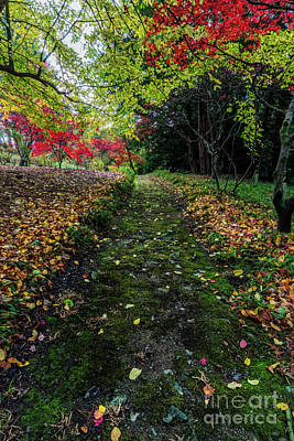 Photograph - Autumn Path by Ian Mitchell
