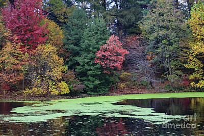 Photograph - Autumn Pond by Mary Haber