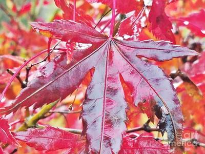 Photograph - Autumn Red by Maria Urso