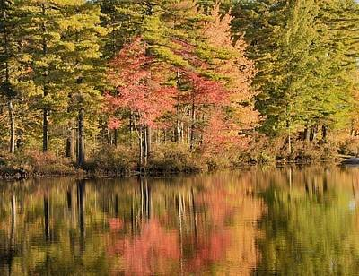 Photograph - Autumn Reflections by Patricia Dennis