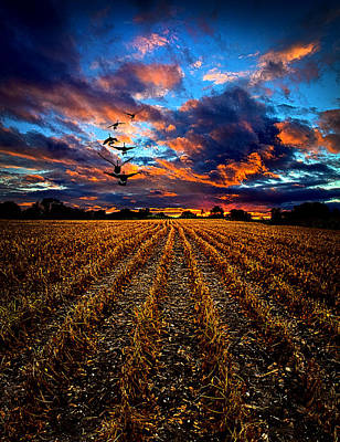 Natur Photograph - Autumn Rising by Phil Koch