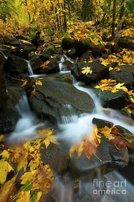 Photograph - Autumn Rush by Mike Dawson