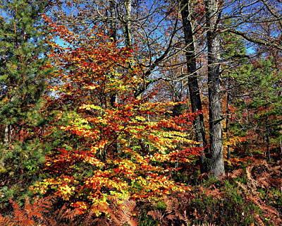 Photograph - Autumn Scenery by Anthony Dezenzio