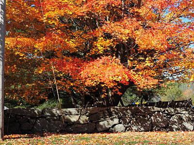 Photograph - Autumn Shadows by Bill Tomsa