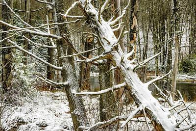 Photograph - Autumn Snow West Virginia by Thomas R Fletcher