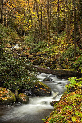 Autumn Woods Photograph - Autumn Stream by Andrew Soundarajan