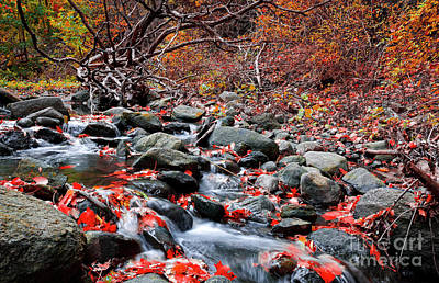Photograph - Autumn Stream With Red Maple Leaves by Charline Xia
