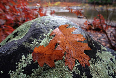 Digital Art - Autumn Study by Patrick Groleau