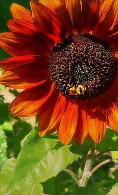 Photograph - Autumn Sunflower And Bumble Bee by Amanda Smith