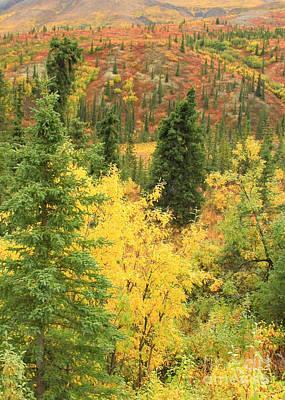Photograph - Autumn Tundra by Frank Townsley