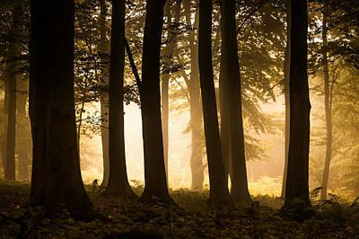 Landscape Photograph - Autumn Woodland by Ian Hufton