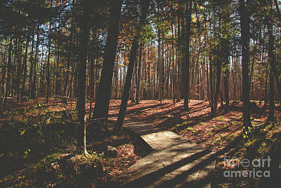 Photograph - Autumn Woods by Cheryl Baxter