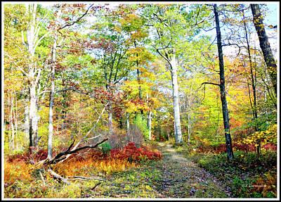 Photograph - Autumn Woods, Luzerne County, Pennsylvania by A Gurmankin