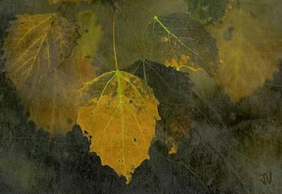 Photograph - Autumn Yellow by Jim Vance