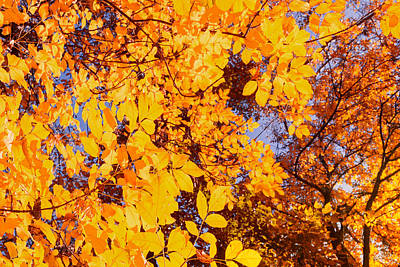 Photograph - Whispering Sienna Leaves Of Autumnal Fall by John Williams