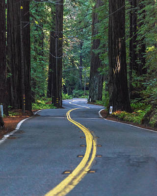 Photograph - Avenue Of The Giants by Alpha Wanderlust